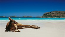 Don't miss out: Superb relocation package to Australia